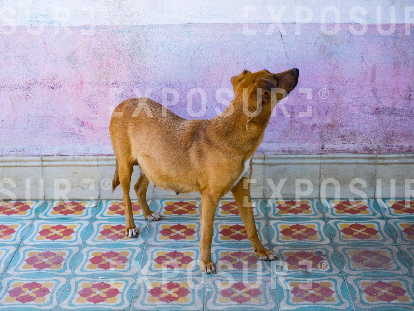 Dog on Tiles