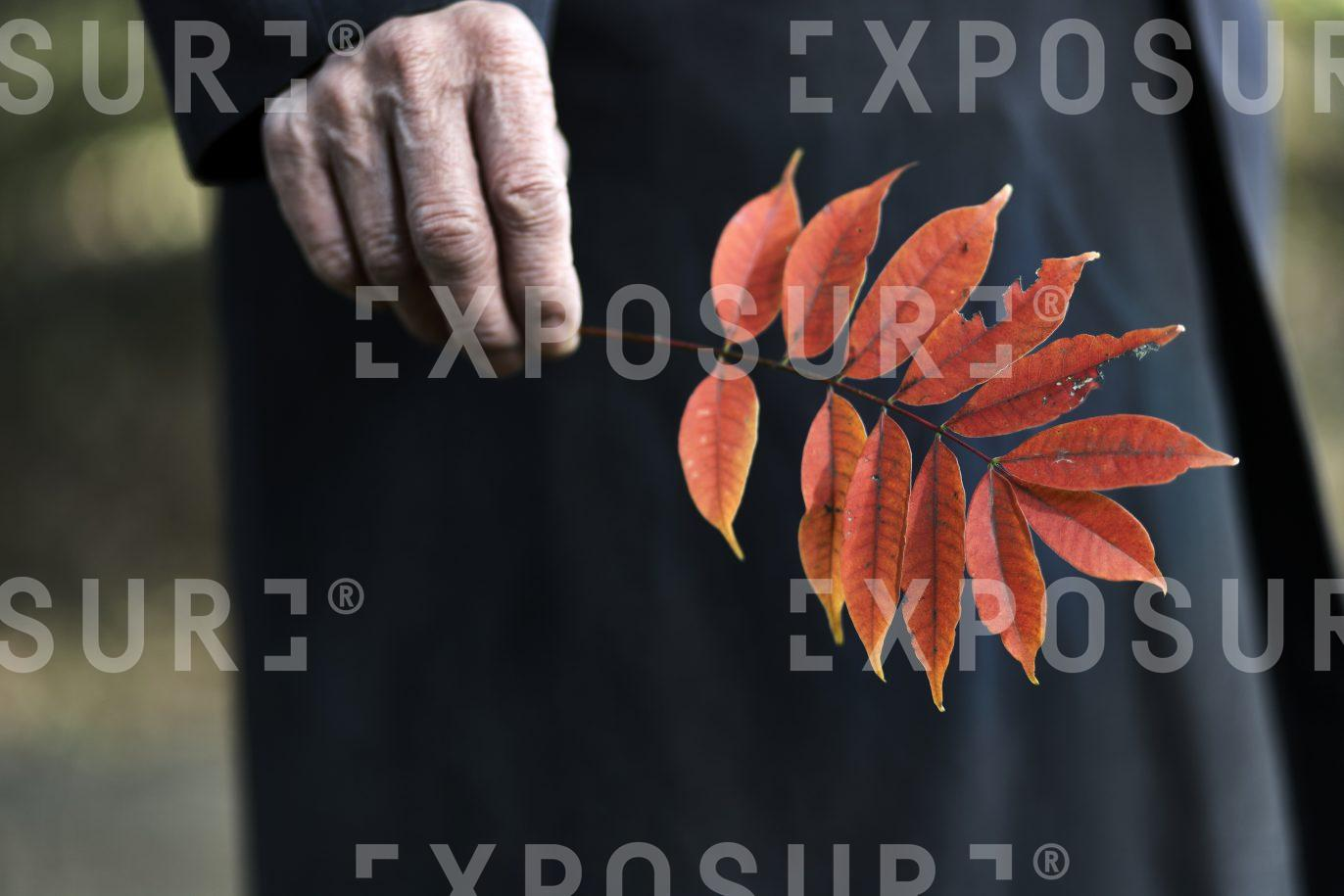 Old Man with Autumnal Leaves