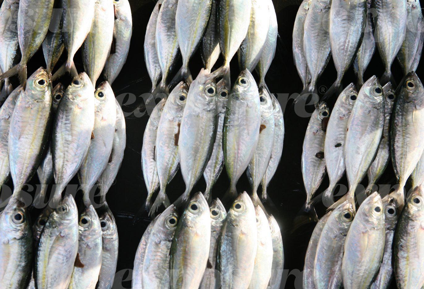 Fish hung up